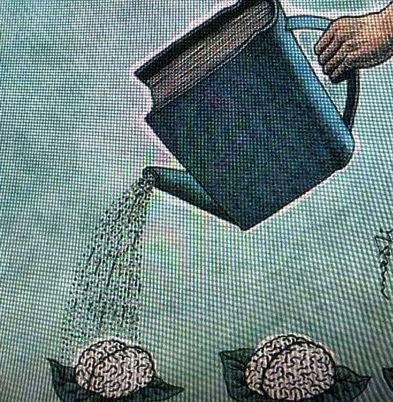 regar cerebros 2